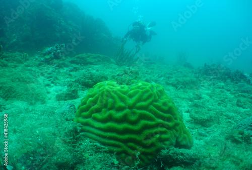 Foto coral reef , caribbean sea , Aruba Island