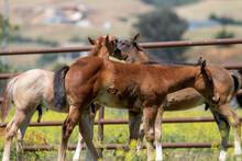 Baby Horses In California