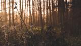 Pajęczyna na krzakach o poranku z drzewami w tle
