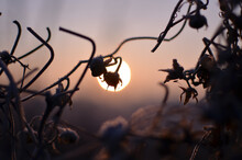 Dry Flowers In Frost On The Background Of The Sun