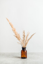 Pampasgras In Einer Vase