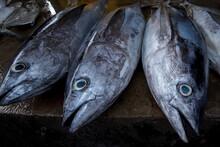 Fresh Tuna. Yellowfin Tuna In The Market