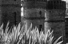 Vendée, France; February 26, 2021: Black And White Photo Of An Iris Par Terre At The Foot Of The Rosary Of La Salette, Sacred Buildings Located In La Rabatelière.
