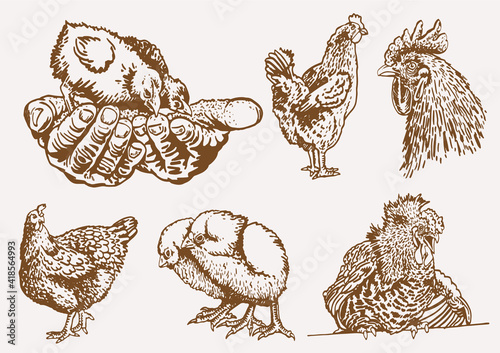 Stampa su Tela Vector vintage collection of  roosters and hens,sepia background,farm bird