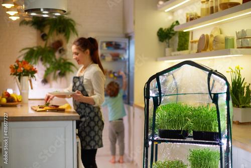 Slika na platnu organic food growing, family home kitchen gardening, microgreen sprouts greenhou