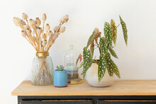 Begonia Maculata Next To Dried Poppy Seed Pods In Golden Glass Vase On Wooden Sideboard Against White Background.