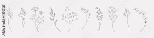 Obraz Botanical drawing. Minimal plant logo, meadow greenery, leaf and blooming flower abstract sketch element collection, linear rustic branch. Vector hand drawn wedding invitation bouquet decoration set - fototapety do salonu
