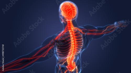 Foto Central Organ of Human Nervous System Brain Anatomy
