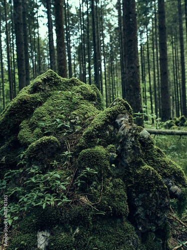 Finnish forest in lapland in summer Wall mural