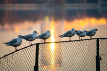 Seagulls Sitting On The Fence, With Reflection Of Skyscraper In The Background, During Sunset