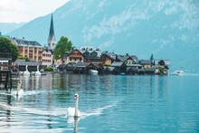 Swans In Lake Hallstatt Town On Background
