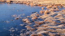 Frozen Wetland With Frost Along The Poudre River In Fort Collins, Northern Colorado - Running Deer Natural Area
