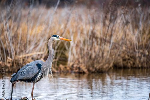 Fotografia, Obraz great blue heron