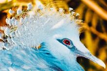 Close Up Of A Bird