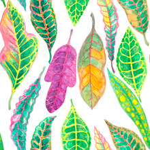 Croton Leaf Watercolor Seamless Pattern, Illustration Isolated Clipping Path