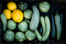 High Angle Close Up Of Freshly Picked Yellow And Green Marrows And Courgettes.