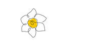 Daffodil Flower In Yellow Color Continuous Line Drawing. Blossoming Narcissus In Spring Isolated On White Background. Garden Flower With Minimalist Design In Hand Drawn Style. Vector Illustration