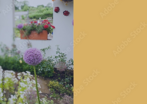 Composition of flowers in summer garden with large rectangle of yellow copy space