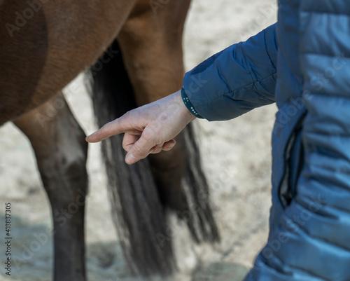 Horses. Horseriding. Instruction. Coaching. Pointing finger. Wallpaper Mural