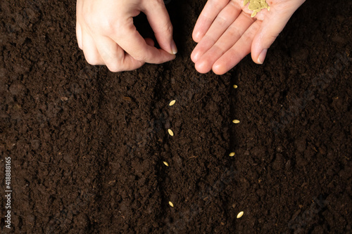 Fotografie, Obraz Farmer hand sawing seed on soil close up