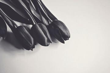 Czarno białe tuliapny.