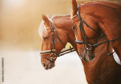 Fényképezés Portrait of two sorrel horses with a light mane and bridle on the muzzle, standing side by side on a sunny summer bright day