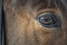 Horses. Horse Eye.