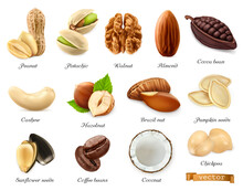 Nuts, Seeds And Beans. 3d Vector Realistic Objects Set