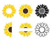 Vector Yellow Sunflower. Sunflower Silhouette Text Frame Isolated On White Background.