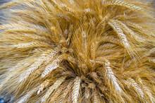 Wheat Ears, Background