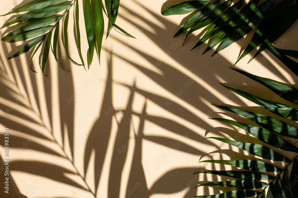 Fototapeta Abstract background of fresh palm leaves and shadows on the beige wall