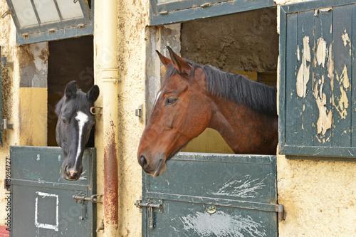 Le Touquet, France - april 3 2017 : the equestrian centre Wallpaper Mural