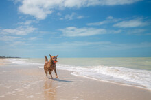 Perro Jugando En La Playa En Un Soleado Dia De Verano