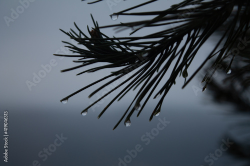 Obraz Pino mopjado - fototapety do salonu