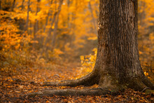 Beautiful Autumn Landscape With Fallen Dry Leaves