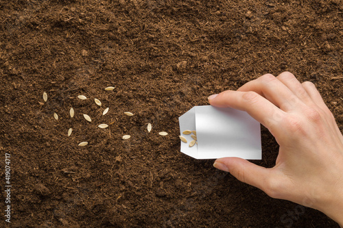 Obraz na plátně Young adult woman hand holding white paper pack and pouring seeds on fresh dark soil