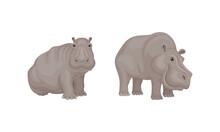 Hippopotamus Or Hippo As Large Semiaquatic Mammal In Different Pose Vector Set