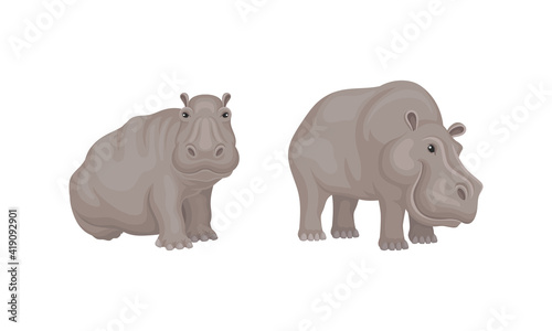 Obraz na plátne Hippopotamus or Hippo as Large Semiaquatic Mammal in Different Pose Vector Set