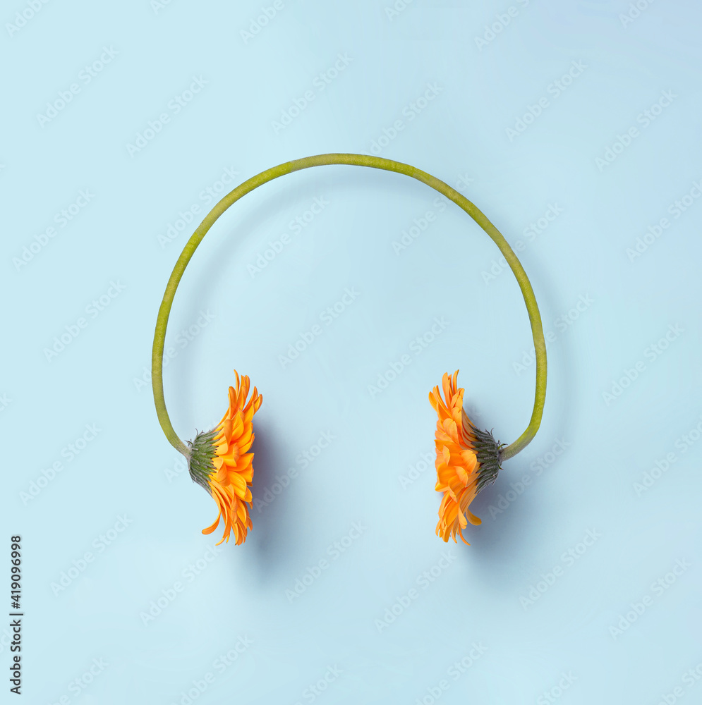 Fototapeta Two orange daisy flowers making a headset on a simple blue background.