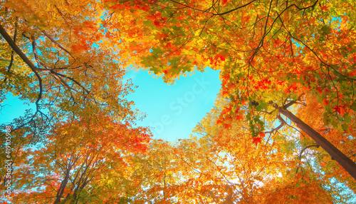 Canvas Autumn forest background