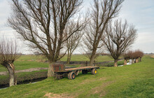 Old Agricultural Wagon In A Dutch Polder With A Wide Ditch. Tall Bare Trees And Pollard Willows Line The Waterfront. It Is A Slightly Cloudy Day At The End Of The Winter Season.