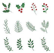 Vector Winter Floral Elements. Winter Branches And Leaves. Hand Drawn Floral Elements. Vintage Botanical Illustrations.