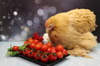 canvas print picture - Huhn mit tomaten