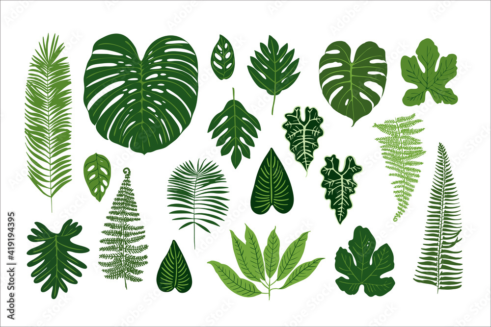 Fototapeta Poster tropical green leaves on a white background. Jungle Exotic plants. Ferns, monstera, palm trees