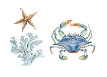 Set Of Watercolor Illustrations In Marine Style Bush With Corals And Blue Crab. Hand Painted On White Background