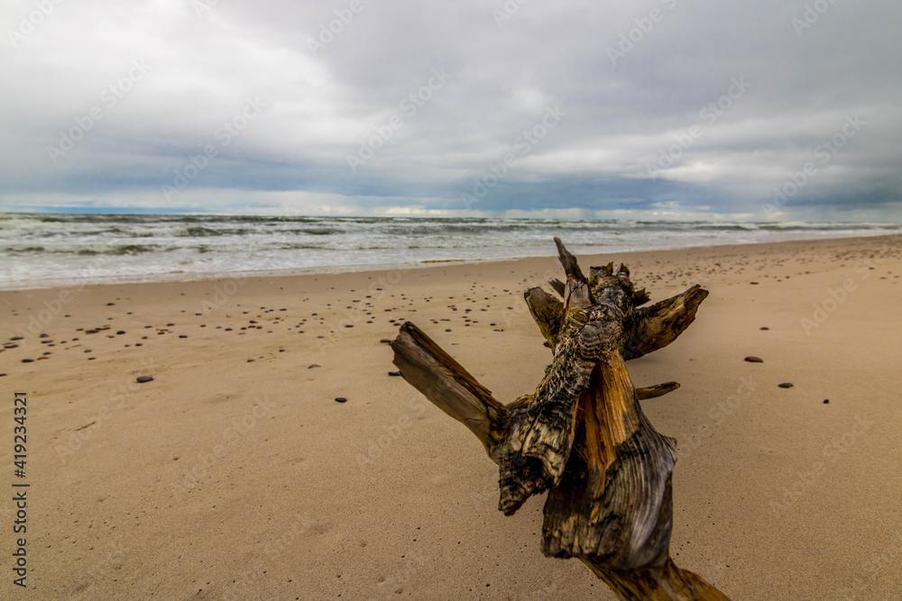 Fototapeta kłoda na plaży morze