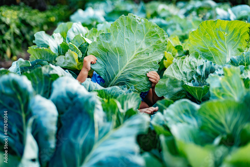 Baby sitting in cabbage plant Fotobehang