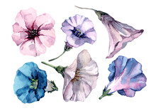 A Set Of Petunia Flowers With Open Bells. Hand Drawn Watercolor Isolated Elements On White Background For Design Of Cards, Wedding Invitations, Print, Textiles, Banner, Packaging, Wallpaper.