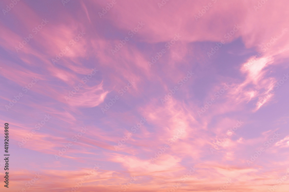 Fototapeta Dramatic sunrise, sunset pink violet blue sky with cirrus clouds abstract background texture