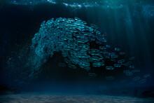 School Of Plastic Bottle Pollution Underwater